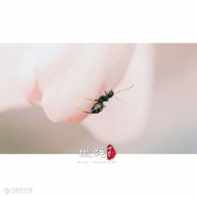 【手机摄影】用放大大大大镜拍摄的花花、绿叶和蚂蚁