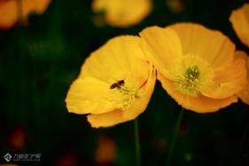 春天里,忙碌的不止人们,还有勤劳的小蜜蜂