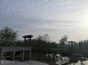 资阳滨江路景观段逛一圈,看到青年林正在恢复往日的模样