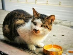 宅在家里躲疫情,偶遇一只流浪猫