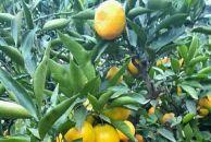 碑记柑橘现摘现发,乐虎app手机版城区送货上门!