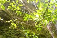 西江月 咏苔藓