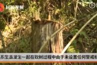 血的教训!雷竞技下载链接一村民砍树未设警示标志,树干倒下砸中路人致死...