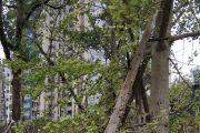 这是什么菌?树子上长了好多,不知道能不能吃!