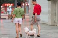 【文明乐虎app手机版人·共建和谐社区】爱狗,就从文明养狗开始!