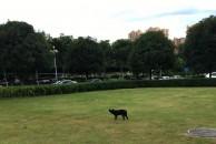 谁家的狗狗掉了?在雷竞技下载链接沱东新区政府这里生了一窝小狗狗...
