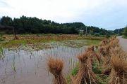 难得的好天气,骑行一个多小时到文昌村河坝上看韭菜花开,一路美景,心情倍爽!