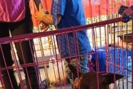雷竞技下载链接市爱宠协会今晚在万达广场进行无偿领养活动,14人领走了6只狗,8只猫!