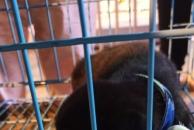 18新利官方下载市爱宠协会今晚在万达广场进行无偿领养活动,14人领走了6只狗,8只猫!
