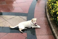谁家的狗狗受伤了?在水润东都附近被三轮车撞骨折了,现被18新利官方下载爱宠群救助!