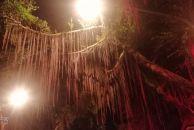 看图说地方,不知道雷竞技下载链接城里的这是什么树,有多少河友认识它?