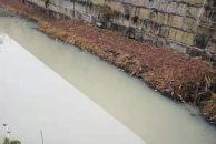 """雷竞技下载链接清泉河水环境实现大变迁,从""""牛奶河""""变成现在这样干干净净啦!"""