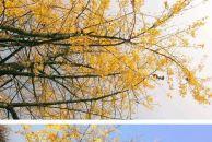 在雷竞技下载链接,能看到秋天吗?