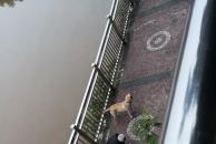 文明养宠物!雷竞技下载链接九曲河边一大爷在收拾狗狗粪便,希望大家都能像这样!