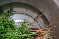 粗纤维简餐:蒸红苕、土豆+凉拌胡萝卜缨+麦片粥