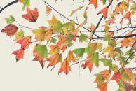 拍下我眼中的秋天,雷竞技下载链接北站那一抹秋色