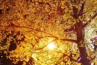 【18新利官方下载晒银杏】又是一年赏叶季,去小北街赏银杏,错过了又要等一年哦!