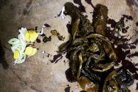 咸烧白的家庭做法,肥而不腻,色泽金黄,还入口即化哟!