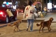 在18新利官方下载成都银行外面看到一女土带两只大狗没栓绳,希望爱狗人土出门还是把牵引绳栓好!