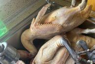 鸡、鸭好吃,就是处理过程太麻烦了.....我弄了几个小时才弄干净!