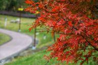 今天从凤舞广场打卡18新利官方下载凤岭公园,远眺老城区,真是美极了!