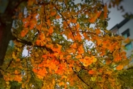 """【晒18新利官方下载银杏】寒流来袭,小北街的""""醉""""美季要来了,让我们期待满地金黄的那一刻。又有美图更新啦!"""