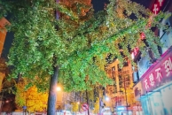 【晒18新利官方下载银杏】18新利官方下载中城街——夜晚灯光下的银杏叶也那么的美!