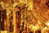 【晒18新利官方下载银杏】夜色中的银杏叶,在灯光映衬下更加金光灿灿