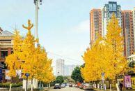 小北街、车城大道、骏兴路,今冬18新利官方下载最美街道是?