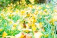 金黄的世界:爱黄灿灿、爱冬日暖阳、爱初冬季节的那抹红!