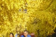 【晒18新利官方下载银杏】18新利官方下载银杏,好安逸。