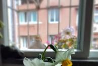 我在网上买的水仙花终于开花了,心里美美哒!大家来看看我家里的春天吧!