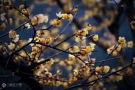 万树寒无色,南枝独有花