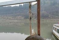 怎么样,这条鱼很鲜活吧?这条鱼够过春节吃的啦!