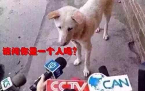 嗨!资阳的单身狗,情人节河马给你介绍个对象呗!(内有福利)