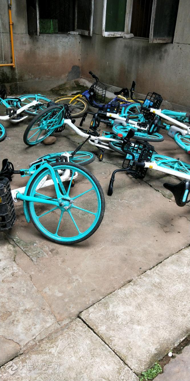 共享单车进入资阳市场,大家也应该爱护它们吧!