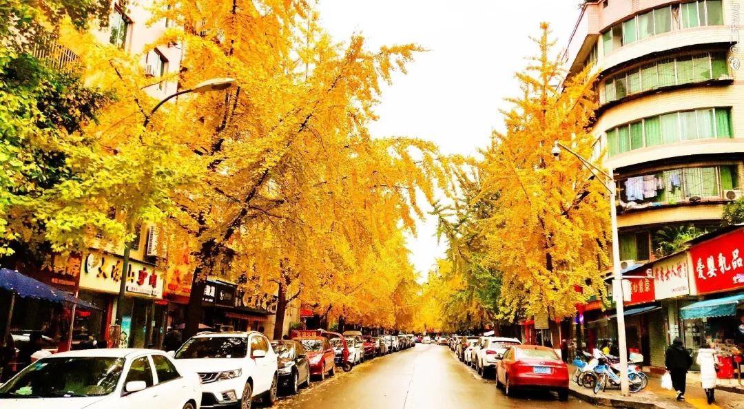 小北街、车城大道、骏兴路,今冬资阳最美街道是?