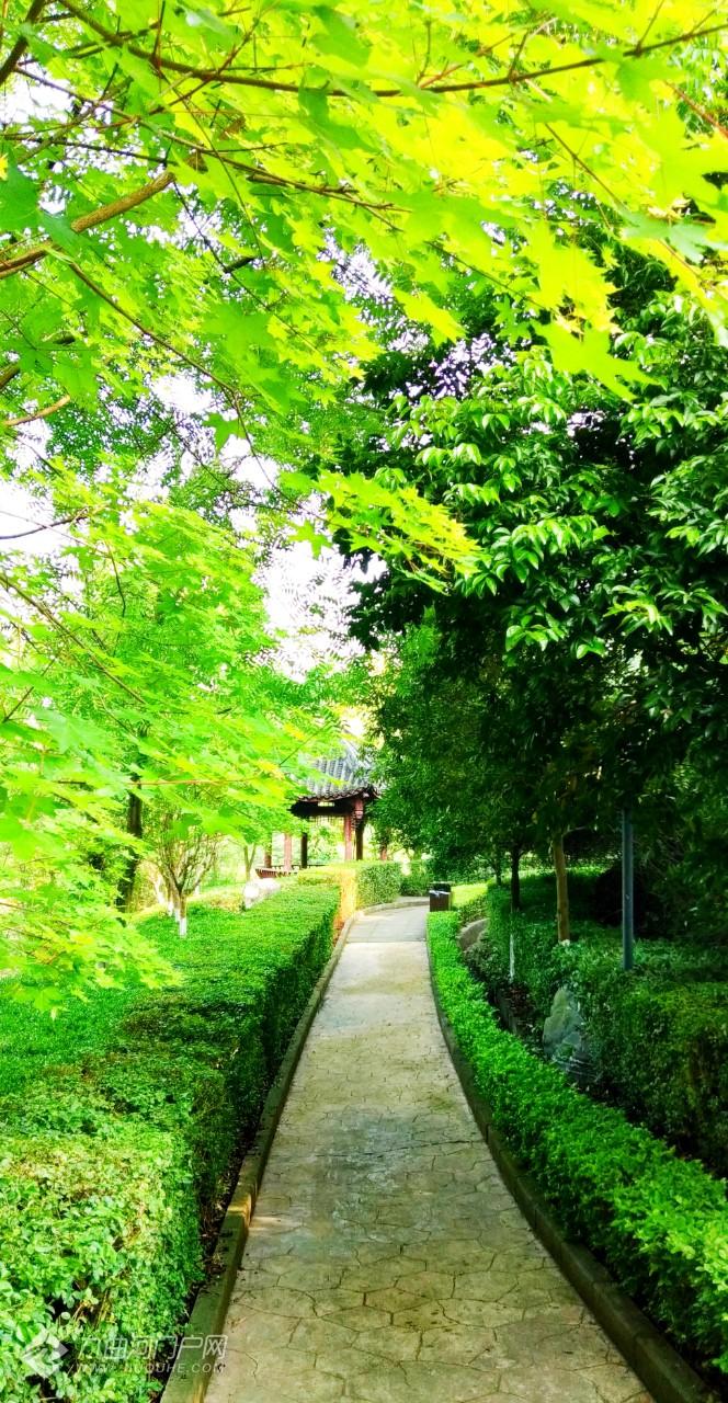 网红打卡地:资阳字库山公园玫瑰园!没出门的亲跟着我的镜头一起大饱眼福