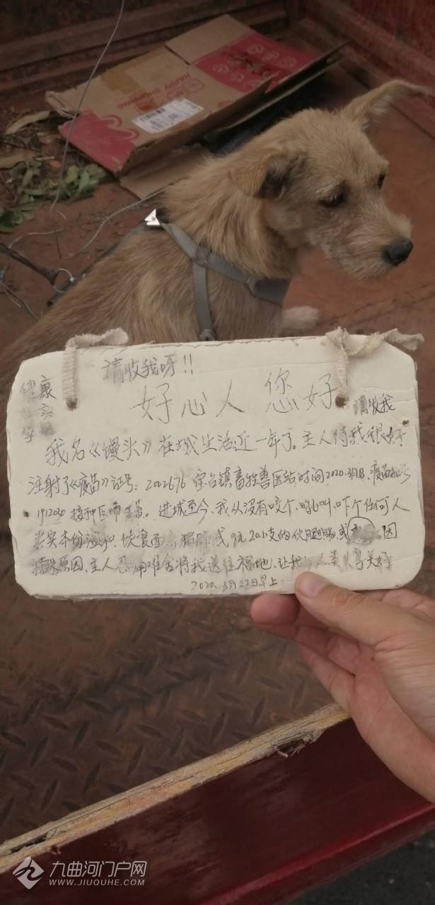 好可怜的狗狗,快要生崽崽了却被遗弃在东岳山上!已被好心人救下,送到护生园! ...