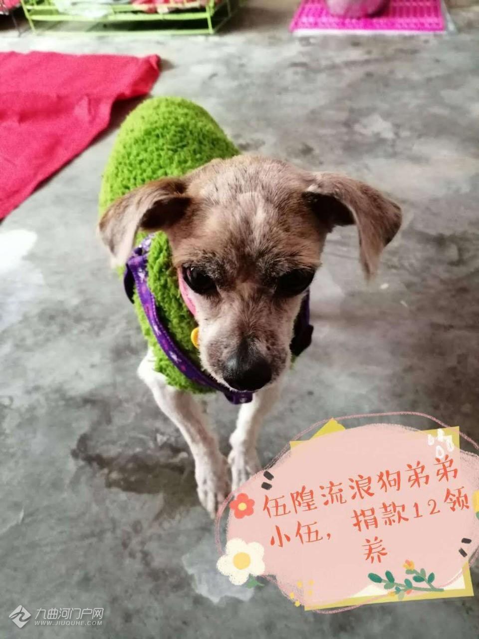 有喜欢宠物的吗?5月30日下午3点将在资阳万达举行流浪猫狗领养活动!