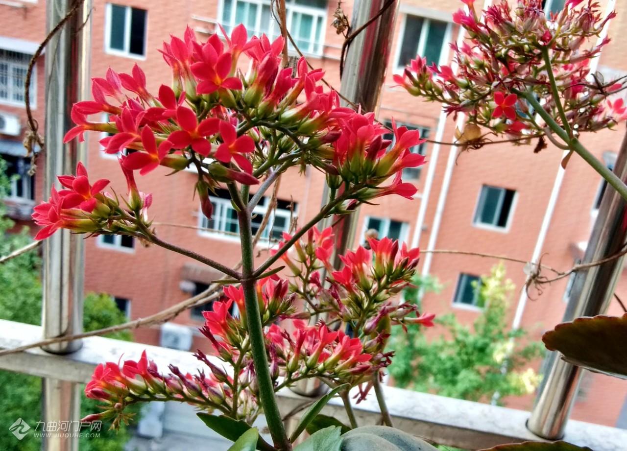 家里蹲阳台游,看看我家满阳台的花草也是收获满满的美呀!