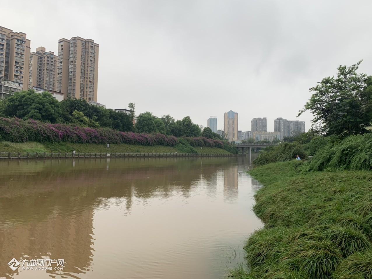 (多图+视频)四川多地暴雨后,资阳九曲河、沱江涨水明显,岸边梯步都被淹了不少!