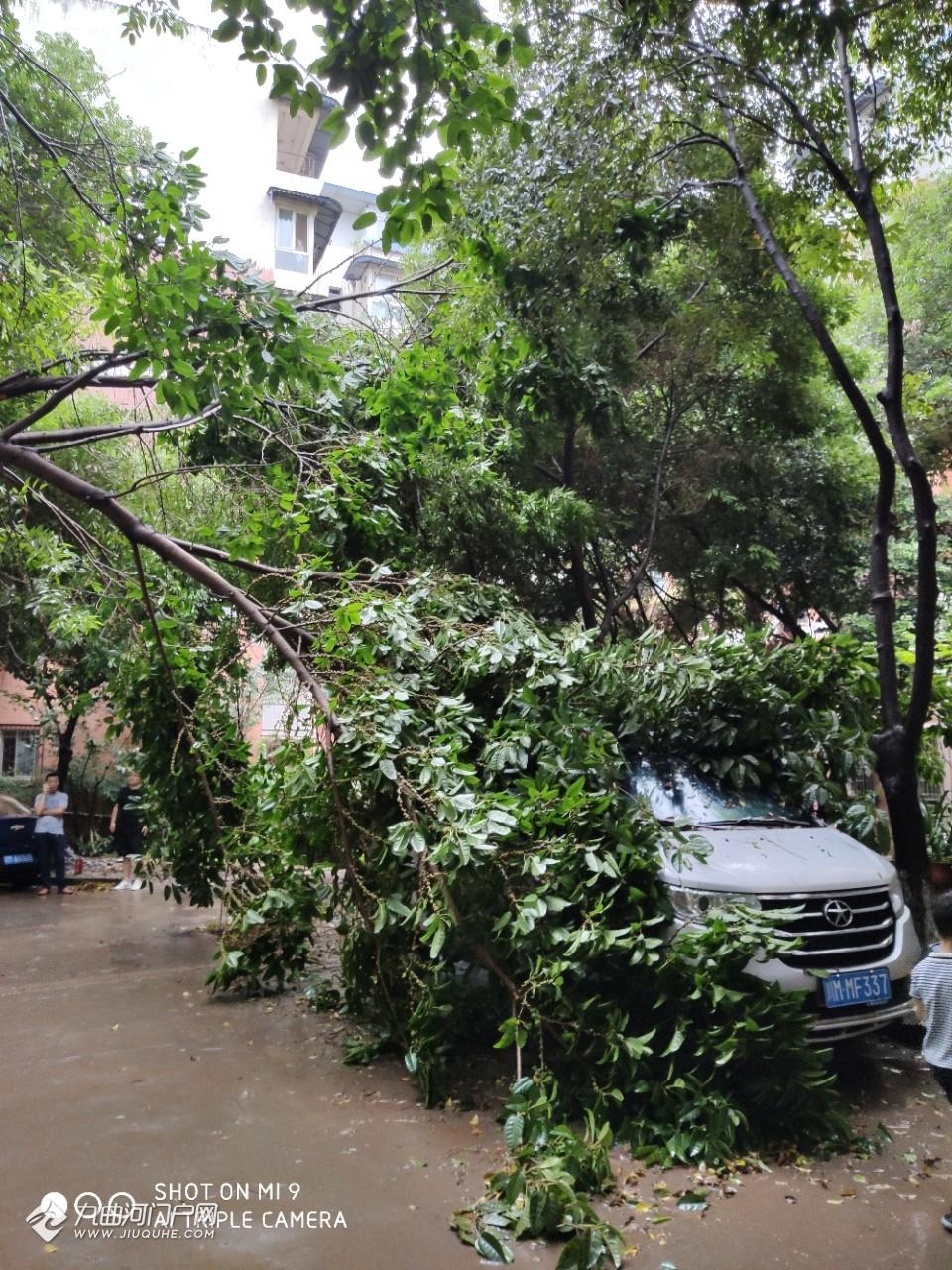 昨夜资阳狂风暴雨一小区树枝断裂砸到小车!