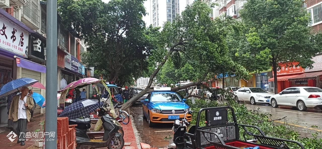 一场豪雨,资阳狮山路的行道树又双叒叕倒了,直接打在了出租车车顶上!