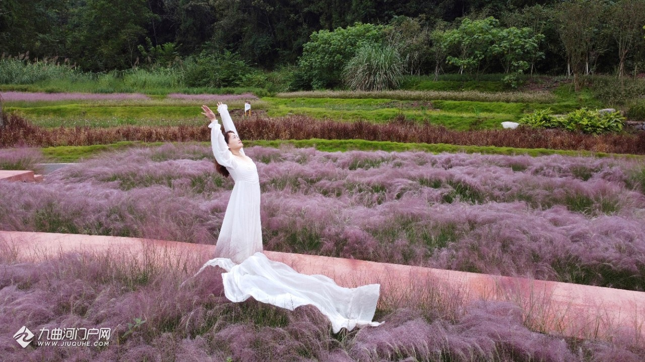 想拍张唯美的照片吗?资阳花溪谷美美的粉黛乱子草开花了,这是不错的地方!