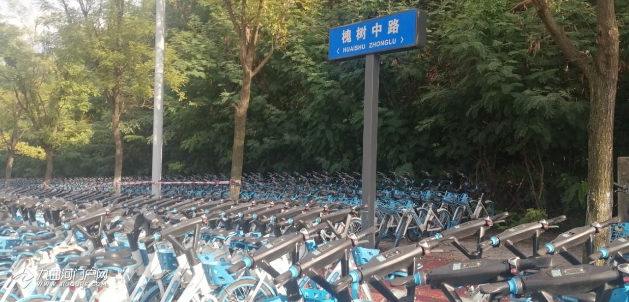 资阳多余的街兔、哈罗电动单车都在槐树中路这里,一排排整齐停放!