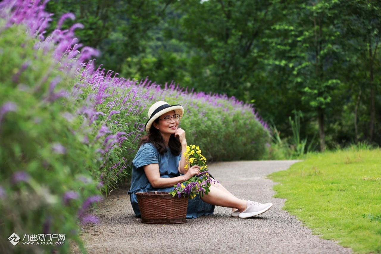 拍过粉粉浪漫的粉黛乱子草,紫色美美的墨西哥鼠尾草也不能错过