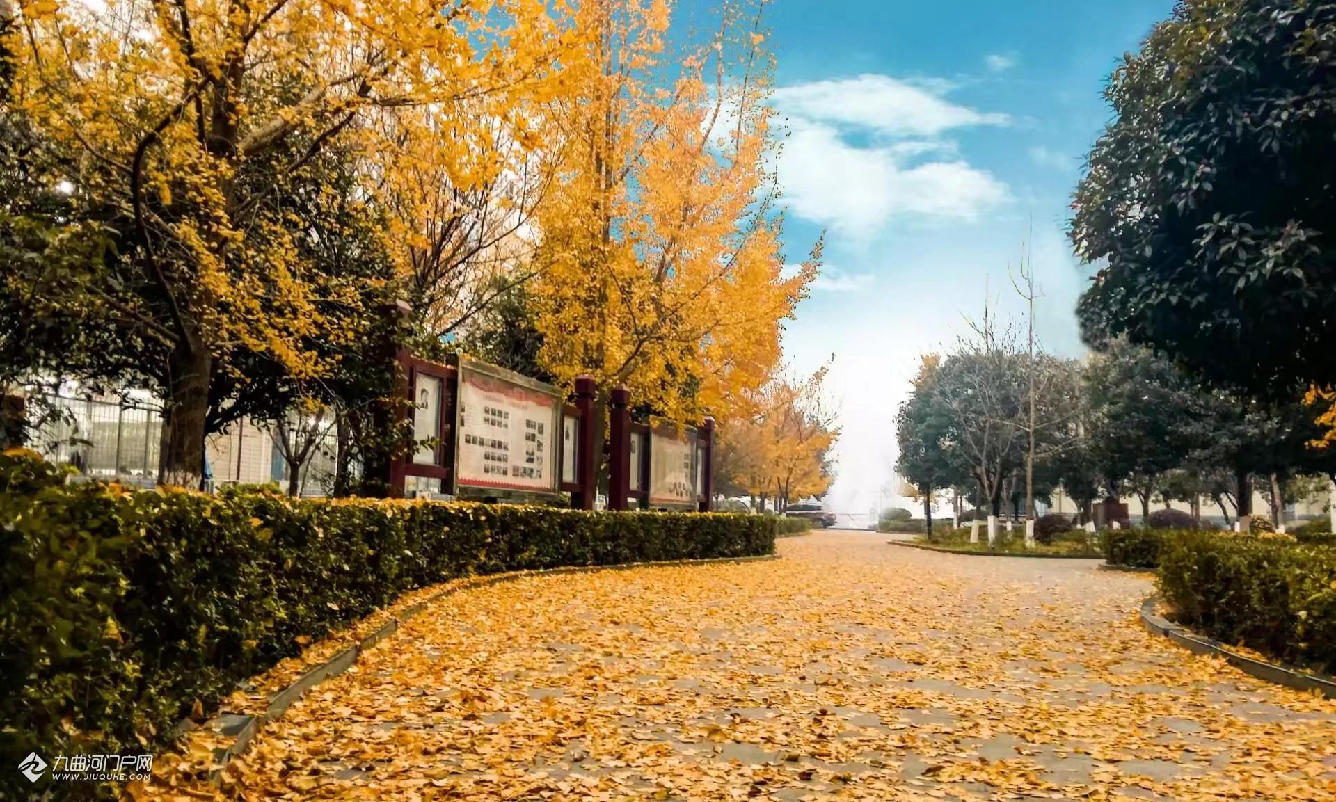 校园冬景.jpg