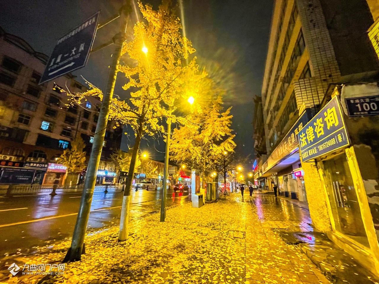 今夜寒风吹落资阳银杏叶,地上层层金黄色,河马办公室楼下的这个景色美绝了!