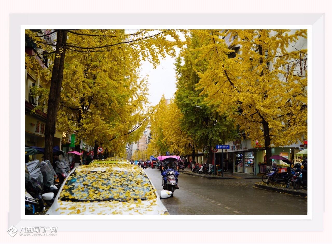 分享一组银杏美景!涵盖了资阳雁江大,小北街,文惠桥等,希望大家喜欢!